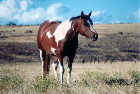 Які органи чуття розвинені у коня?