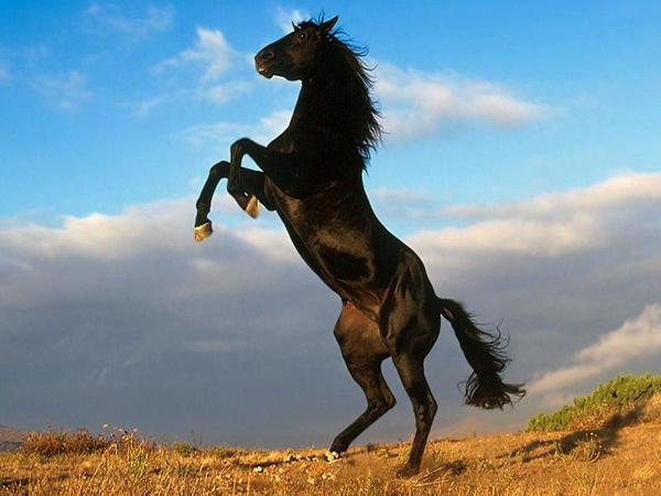 Снятся всадниками к с кони чему