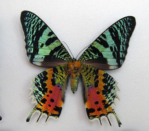 крылья бабочек