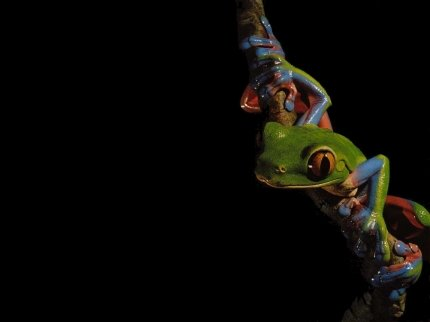 Жаба. Як жаба полює?