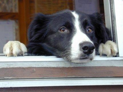 Як собака бере слід?