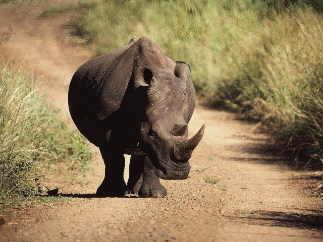 чорний Носоріг. Сайт про тварин