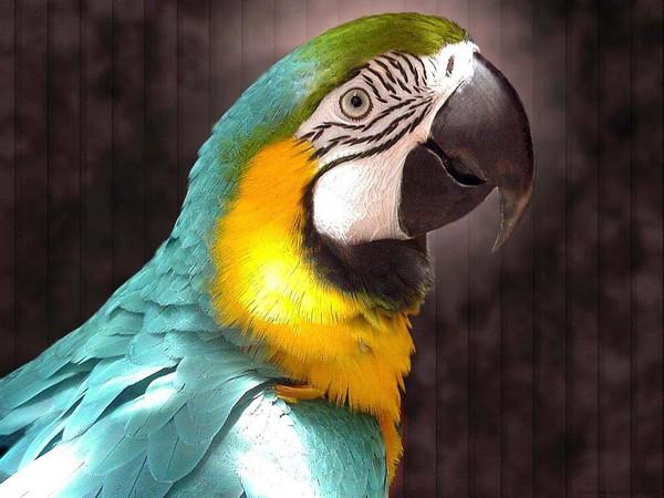 Шикарной птице — шикарный клюв