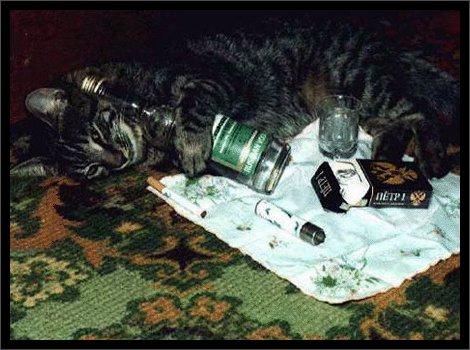 Содержание кошки