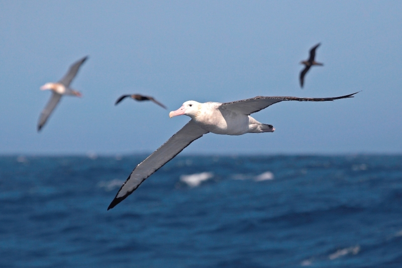 Морські птахи