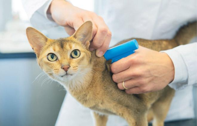 Установка чипа кошке