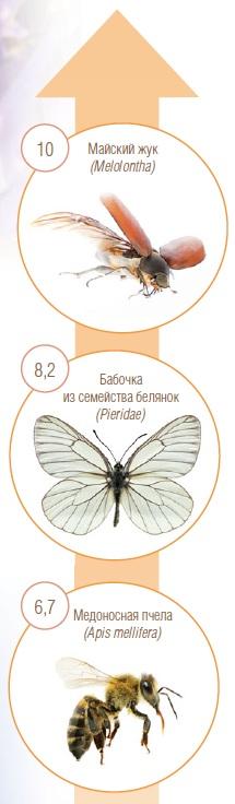 Скорость полета некоторых насекомых