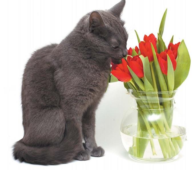 кошка грызет цветы