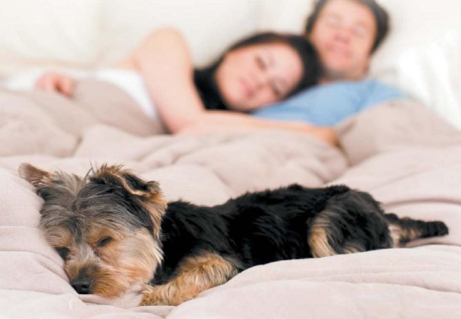 щенок в кровати