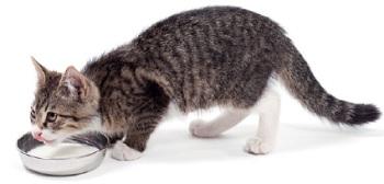 Идеальное питание кошек
