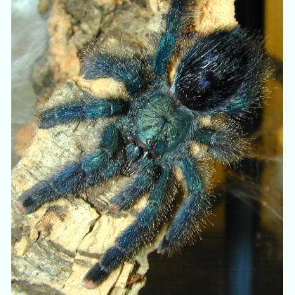 Содержание пауков в доме