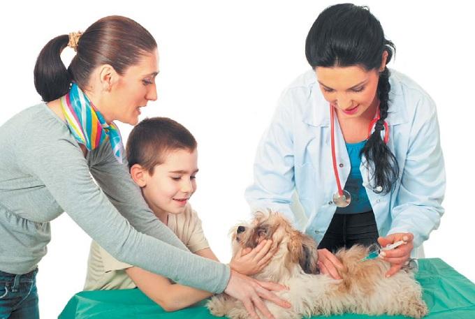 инъекция собаки