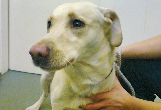 Сокращение черепных мышц у собаки
