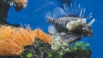 найнебезпечніші риби