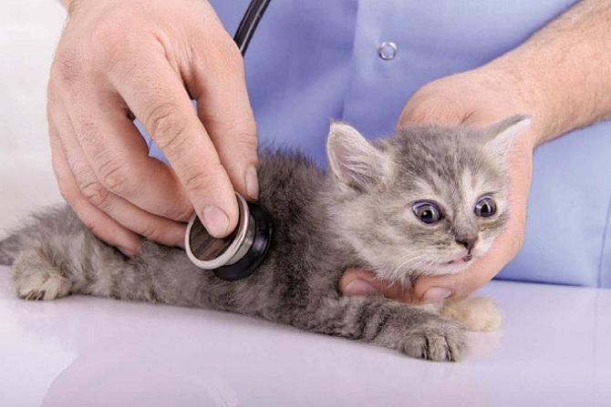 котенок у ветеринара
