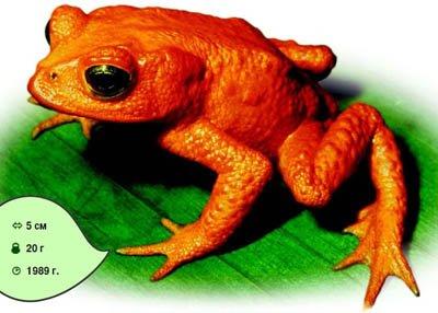 Помаранчева жаба