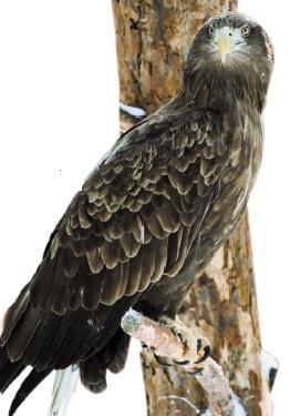 Могильник птах