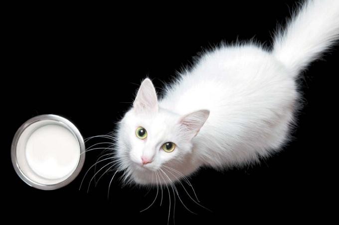 молоко для кошки