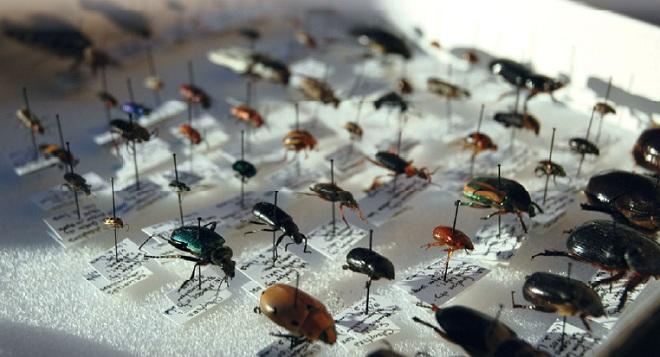 энтомологические коллекции