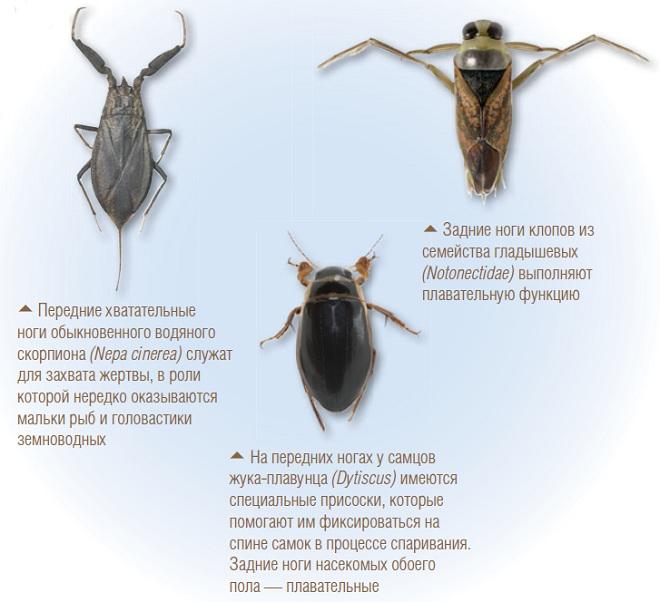Разнообразие ног у насекомых