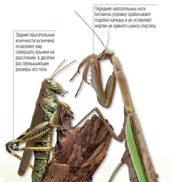 ноги у насекомых