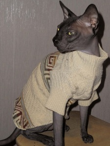 кошка в одежде