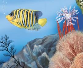 Тварини океанів
