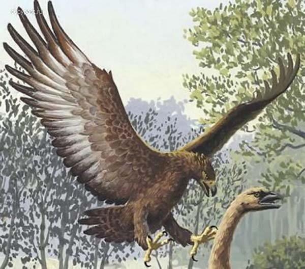 Орел Хааста