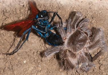 Смертельный выпад осы