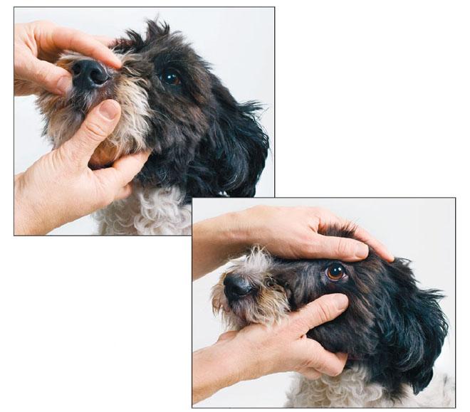 Еженедельный осмотр собаки
