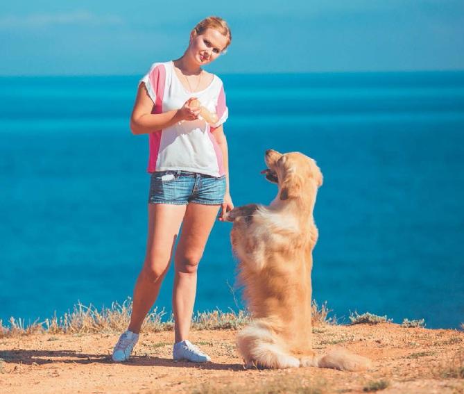 занятия с собакой