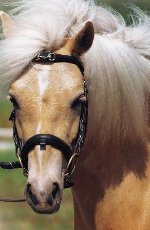Готландский пони