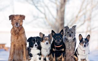 Породи собак. 10 основних груп
