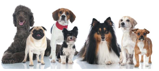 Вибір собаки. Як вибрати собаку?