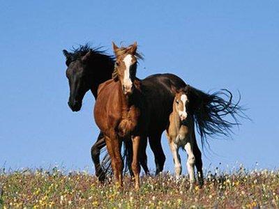 Рекорди коні