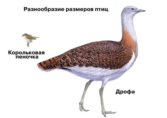 Загальні відомості про птахів