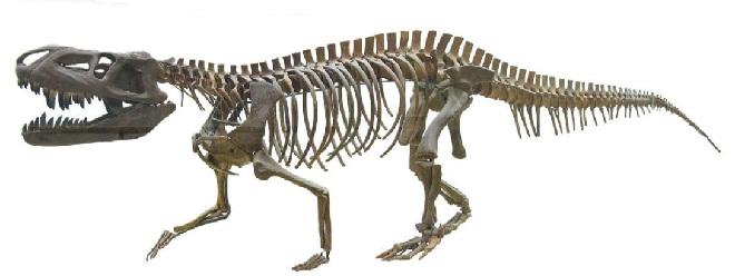 Скелет текодонта