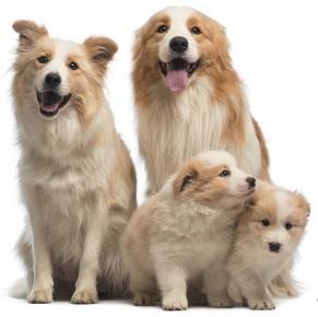 щенок и взрослая собака