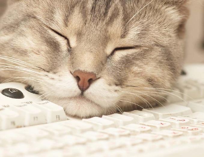 кошка на клавиатуре