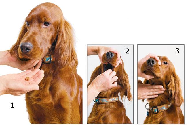 Как давать таблетки собаке