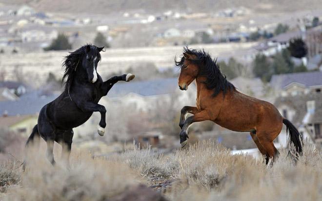 Лошади Вайоминга