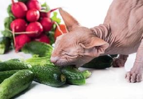 Вегетарианство для собак и кошек
