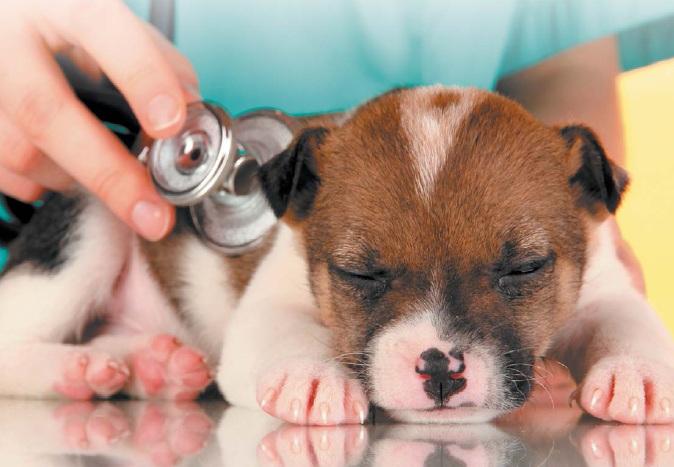 Профилактический осмотр у ветеринарного специалиста