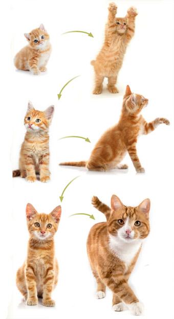 Як визначити вік кішки?