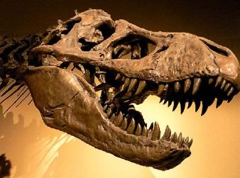Череп хищного динозавра