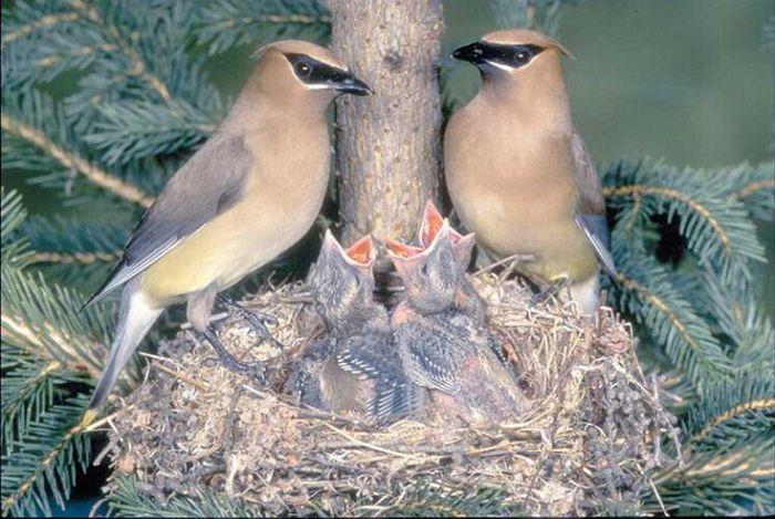 Размножение и забота о потомстве у птиц
