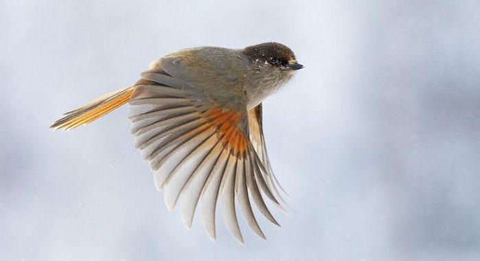 птица летит
