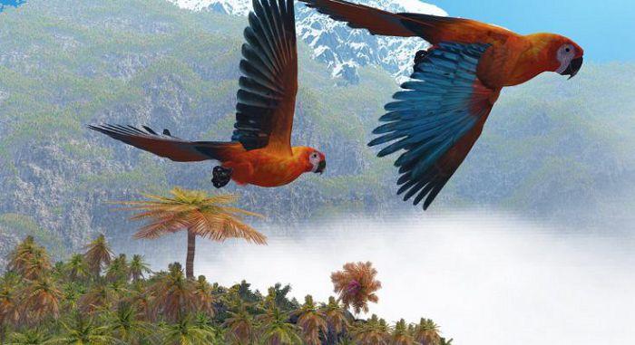 Кубинский ара