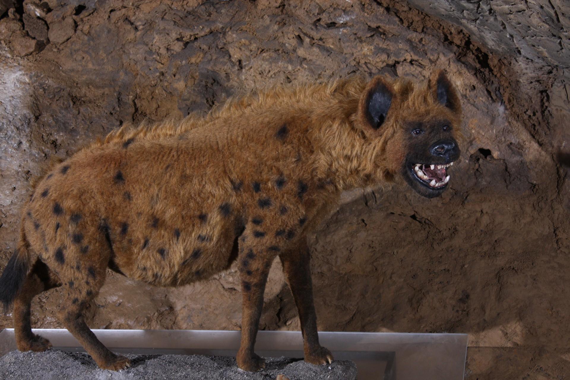 Картинки по запросу Пещерная гиена