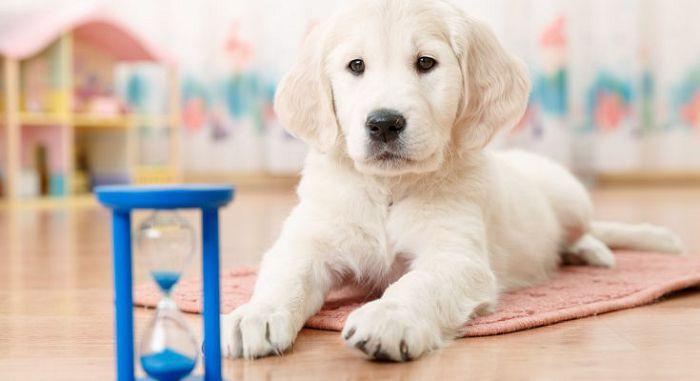 Как приучить собаку к месту